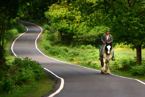 Horse%20on%20a%20road%204.web.jpg