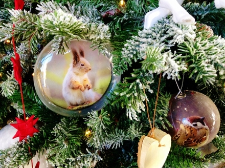 Squirrel in a Christmas tree(640x478).jpg