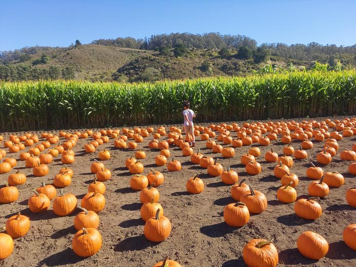 16_Pumpkin patch_02.jpg