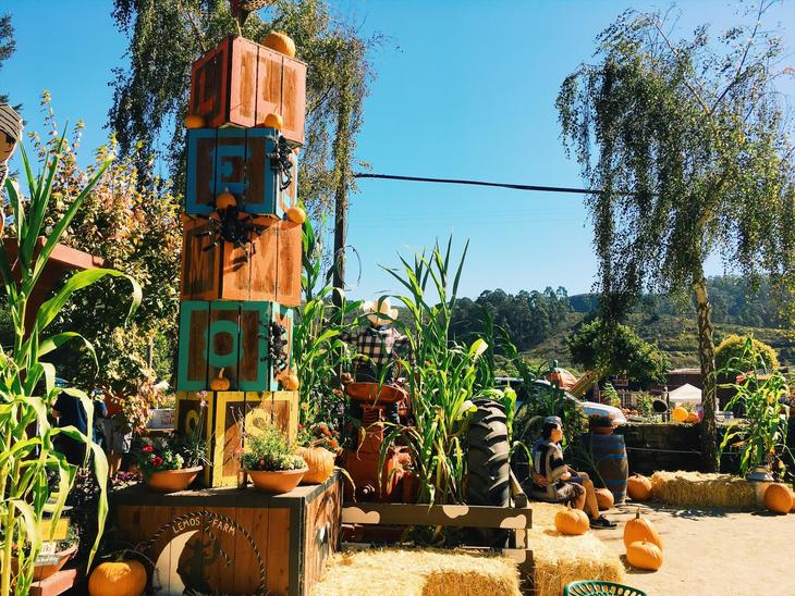16_Pumpkin patch_03.jpg