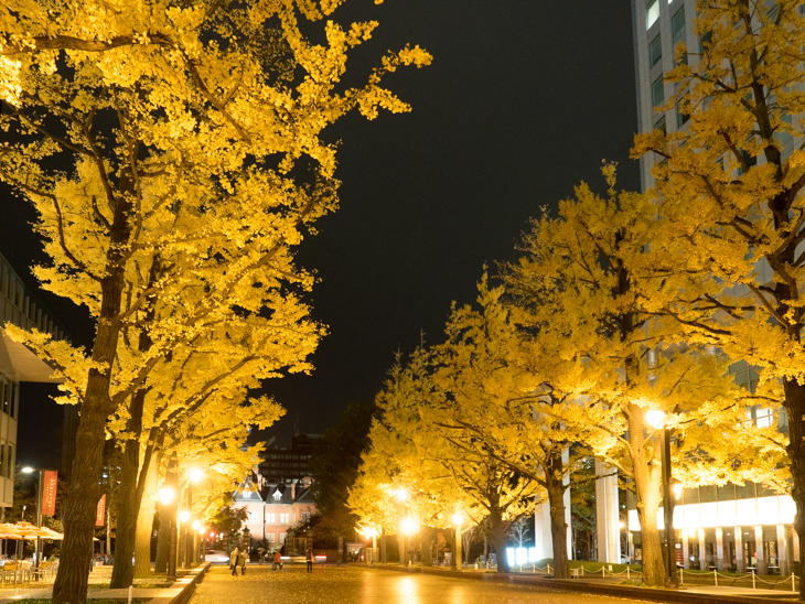 Gingko lines in autumn at AKAPLA.jpg