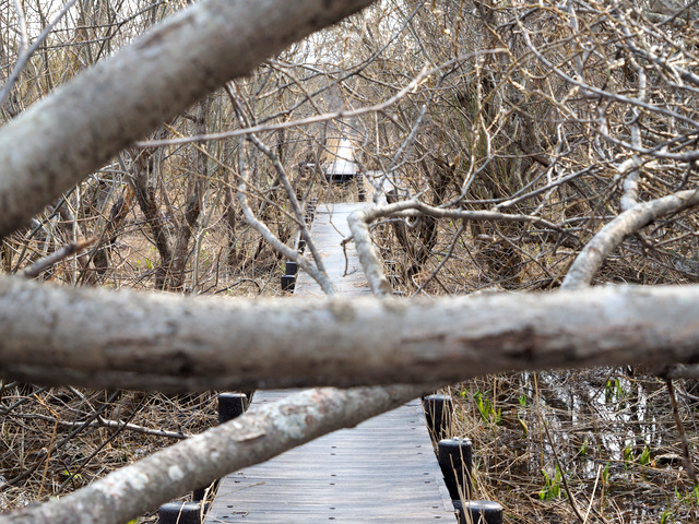 Boardwalk in Makunbetsu Marshland