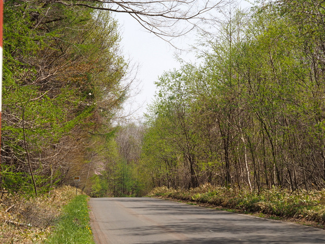 Single Road in the woods around Uenae in Tomakomai-shi