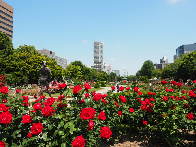 View of Maibaum and Sapporo TV Tower from the Rose Garden