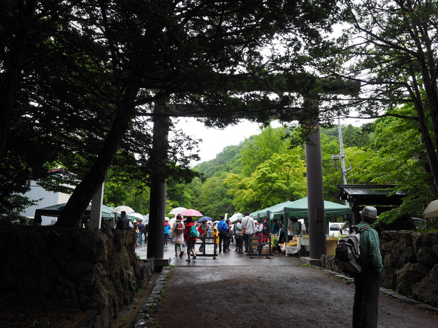 """Jingu Marcket"" held in Hokkaido Jingu Shrine twice a month from June to September"