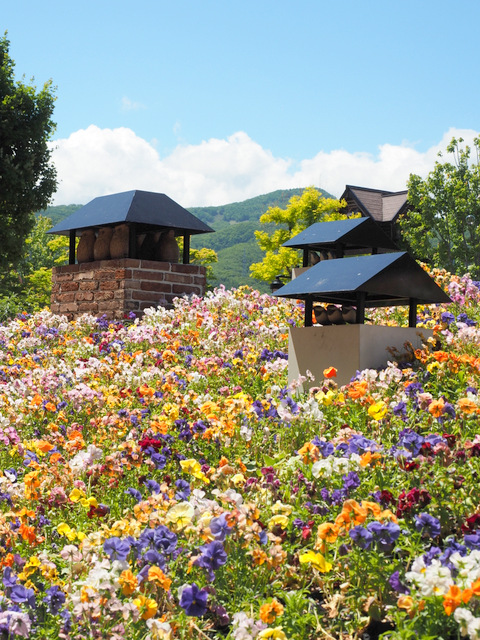 Photo Spot with a lot of flowers at Shiroi koibito Park