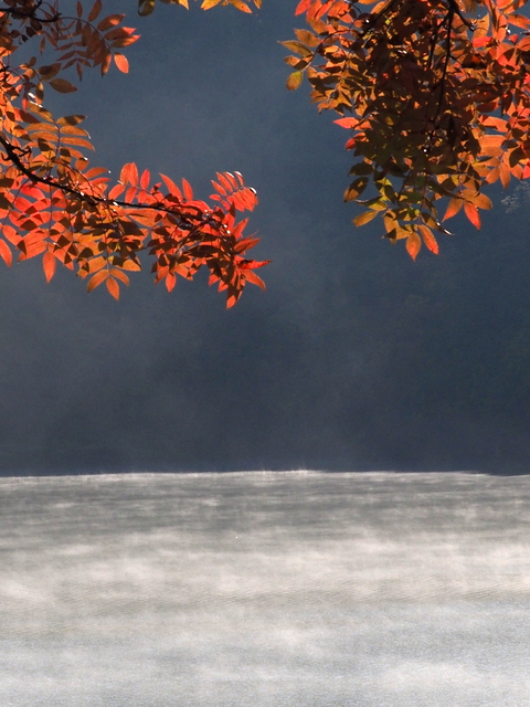 Autumn red leaves and Katsurazawa lake with steam mist
