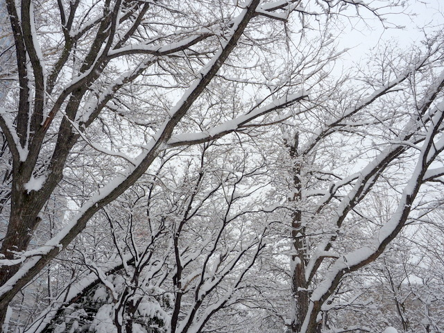 Winter trees with fresh snow