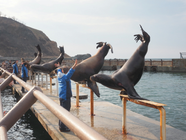 Sea lion's greeting