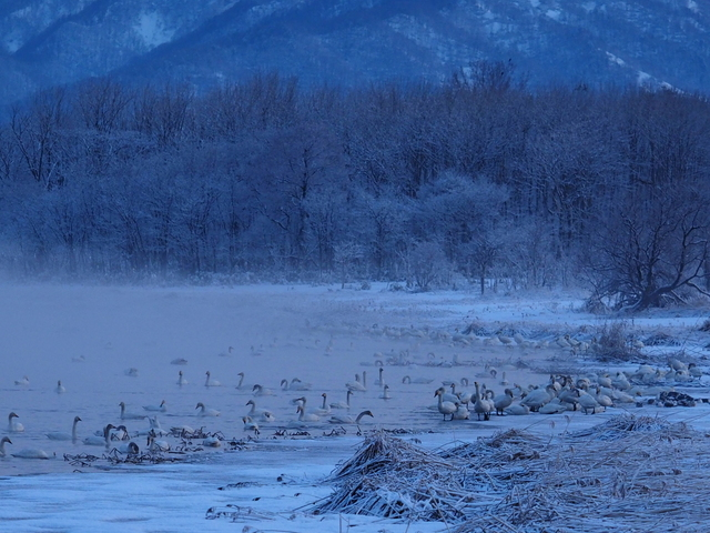 Swan Swamp with fog and rime