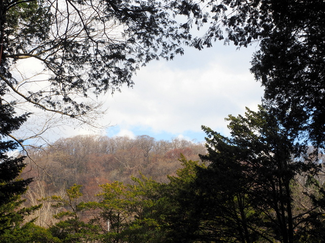 Mt. Maruyama with blossom buds of cherry blossoms
