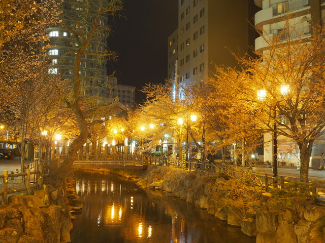 Cherry trees and Kamokamogawa River which flows in Susukino and Nakajima Park