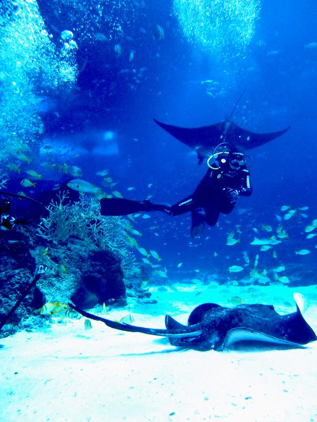 th_Open Ocean Dive - Dive with the Manta Rays.jpg
