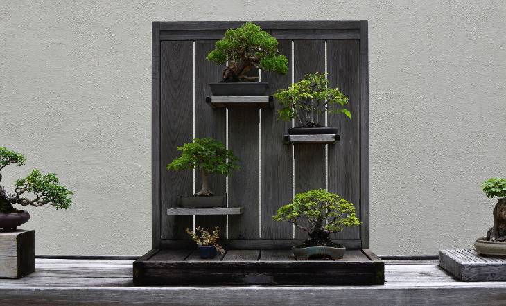 Bonsai Collection.png