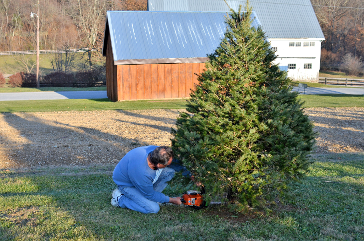 Cutting Christmas Tree.png
