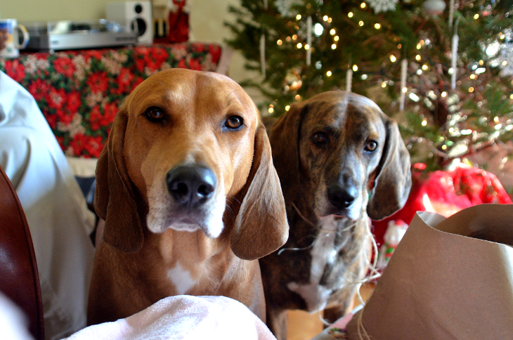 Doggies on Christmas morning.png