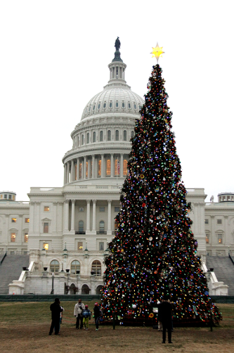 Capitol Tree.png
