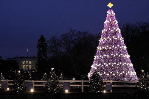 WhiteHouse Tree.png